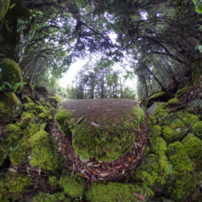 round-forest